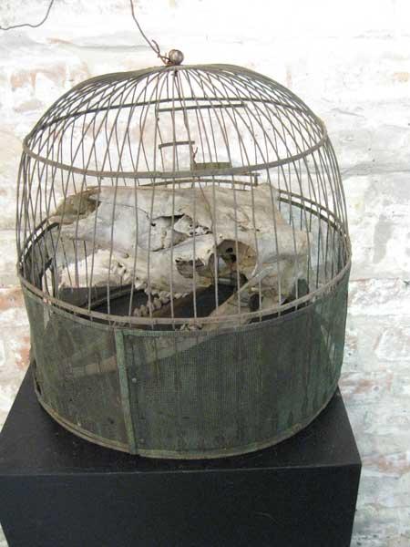 Andrea Volkoff, Skull in Cage